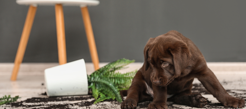 Avoiding Pet Messes in Your Home